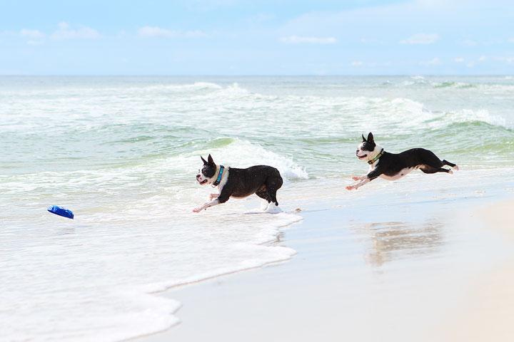 pet-friendly-off-leash-dog-beach-vacation-cape-san-blas-florida-panhandle-38