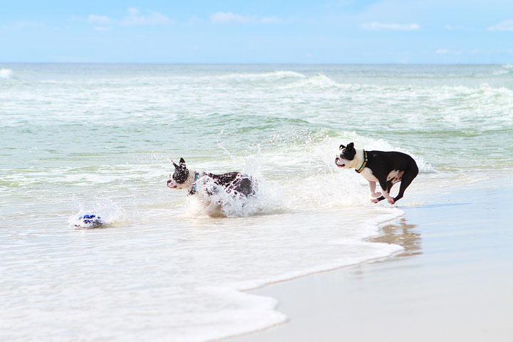 pet-friendly-off-leash-dog-beach-vacation-cape-san-blas-florida-panhandle-39