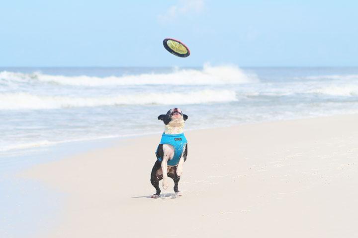 pet-friendly-off-leash-dog-beach-vacation-cape-san-blas-florida-panhandle-4