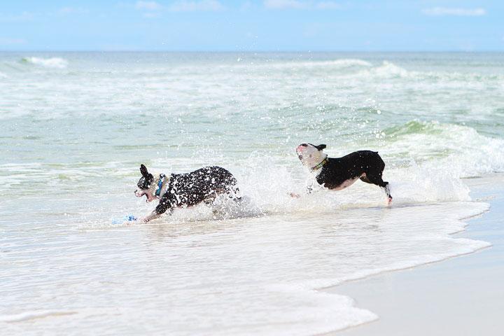 pet-friendly-off-leash-dog-beach-vacation-cape-san-blas-florida-panhandle-40