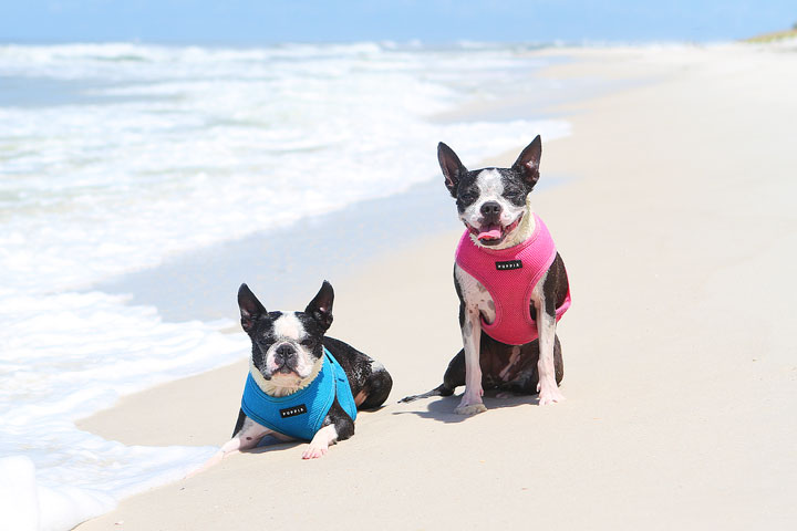 pet-friendly-off-leash-dog-beach-vacation-cape-san-blas-florida-panhandle-41