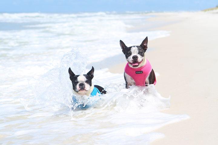 pet-friendly-off-leash-dog-beach-vacation-cape-san-blas-florida-panhandle-42