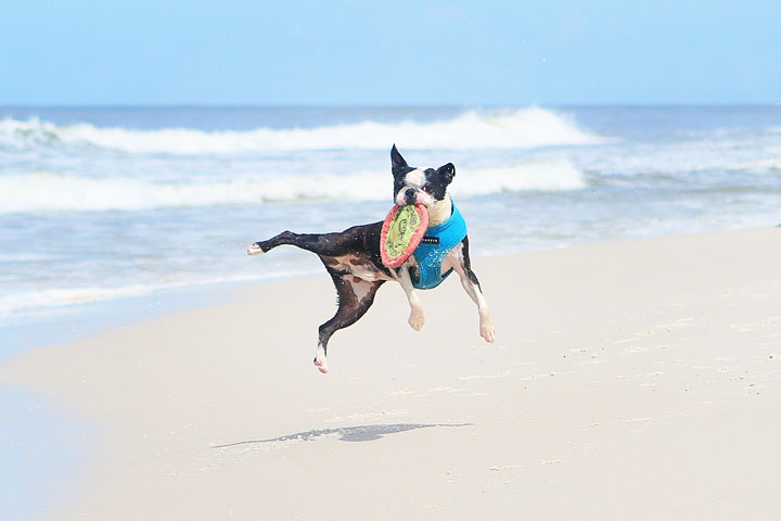 pet-friendly-off-leash-dog-beach-vacation-cape-san-blas-florida-panhandle-5