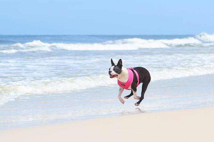 pet-friendly-off-leash-dog-beach-vacation-cape-san-blas-florida-panhandle-6