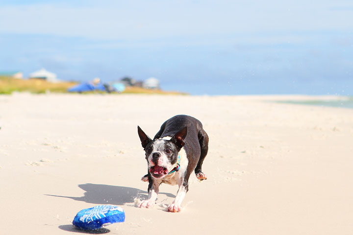 pet-friendly-off-leash-dog-beach-vacation-cape-san-blas-florida-panhandle-7