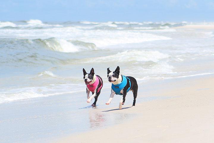 pet-friendly-off-leash-dog-beach-vacation-cape-san-blas-florida-panhandle-8