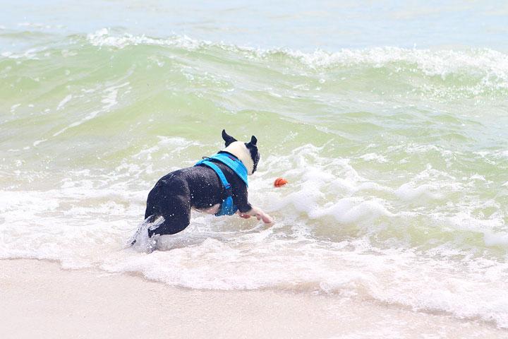 pet-friendly-off-leash-dog-beach-vacation-cape-san-blas-florida-panhandle-9