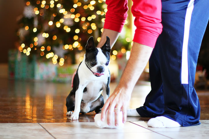 miley-and-howie-boston-terrier-puppies-open-christmas-presents-2013-9