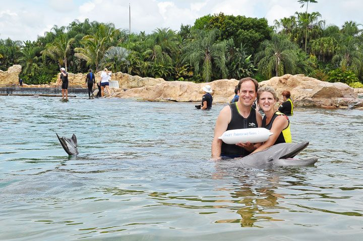Swimming With Dolphins In FL