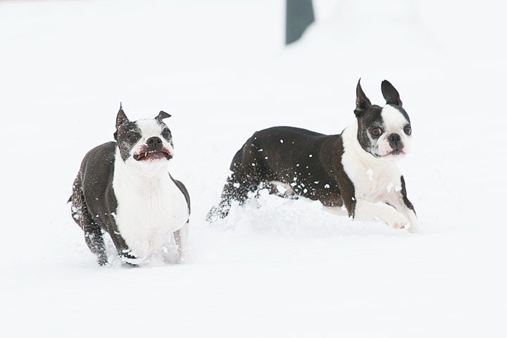 Image of Miley & Howie in the Snow