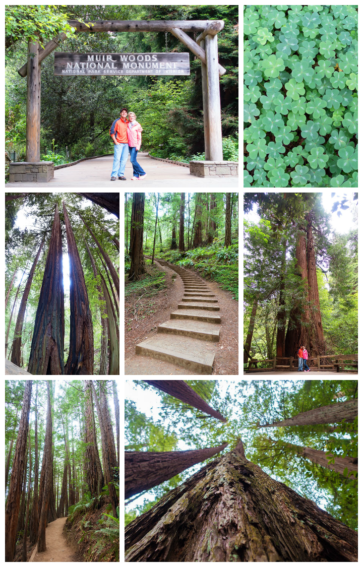 Muir Woods -- Best Things To Do in San Francisco