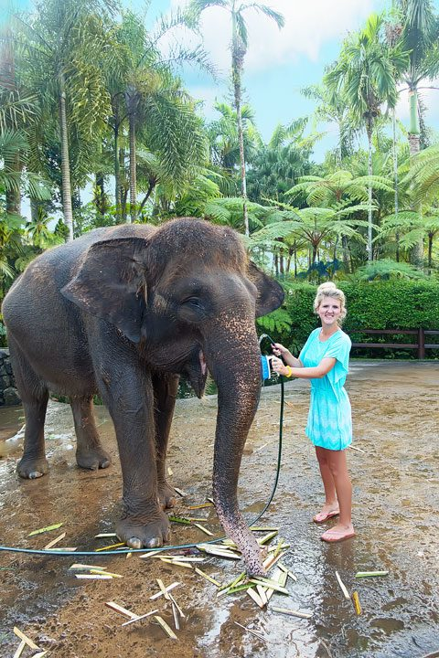 Feed, bathe, and experience the rescued elephants of the Elephant Safari Park Lodge in Ubud, Bali.