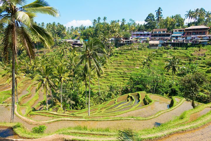Tegallalang Rice Terrace, Ubud, Bali {Where to find & Tips for Visiting}