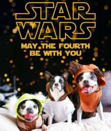 Our Dogs Dressed up in Star Wars Costumes