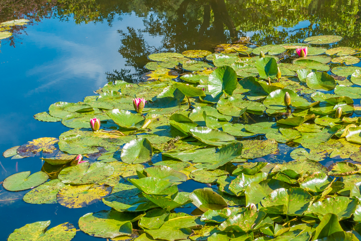 Take an easy, half-day trip from Paris to see Claude Monet's gardens and home in Giverny and see the famous water lilies pond!