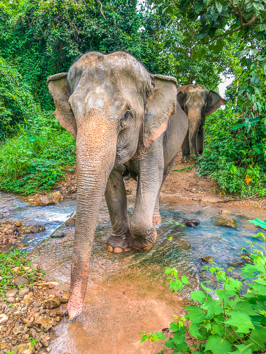 Best Day Trips from Chiang Mai, Thailand -- The White Temple, The Black House, The Golden Triangle, Hiking with Elephants and more! Chiang Mai is a MUST see in Thailand!!