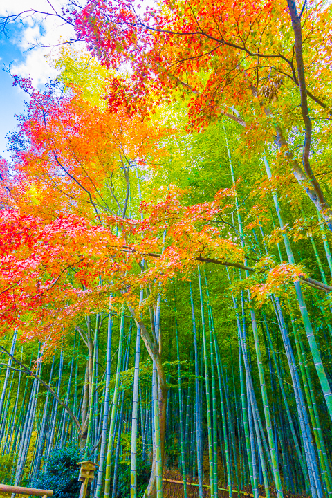 Best things to do and see in Kyoto, Japan