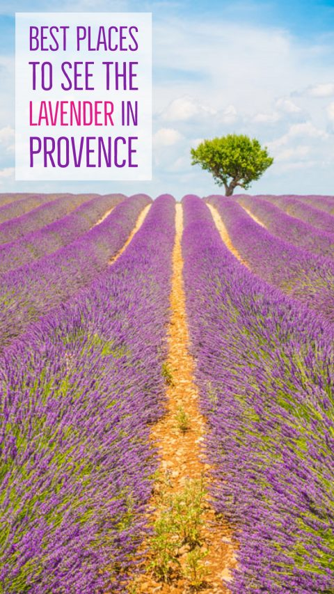 Endless Lavender Fields in Provence, France — Kevin & Amanda