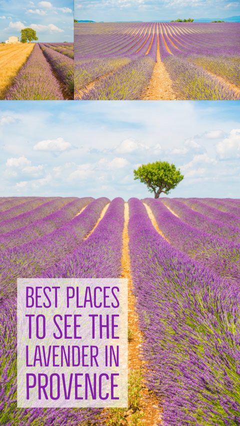 Follow this guide for where to see and photograph the best lavender fields in Provence!