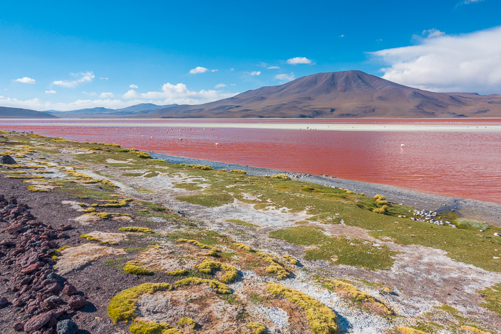 Salt Flats Bolivia — Laguna Colorada near Salar De Uyuni