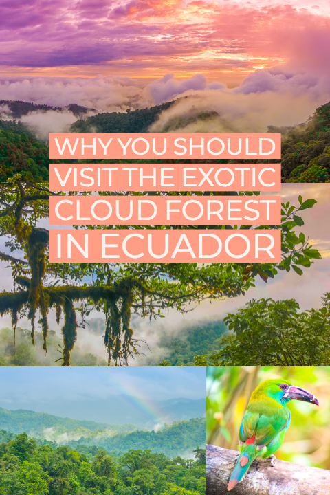 Mashpi Lodge in Ecuador is a bird watcher's paradise!! Come see the colorful toucans, hummingbirds, and all kinds of exotic birds in the cloud forest of Ecuador.