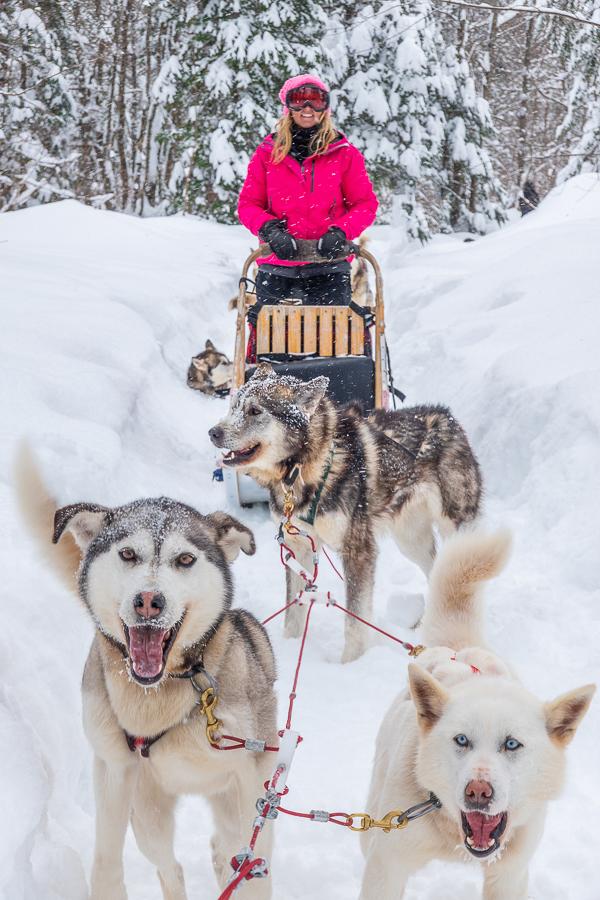 Dog Sledding Quebec City