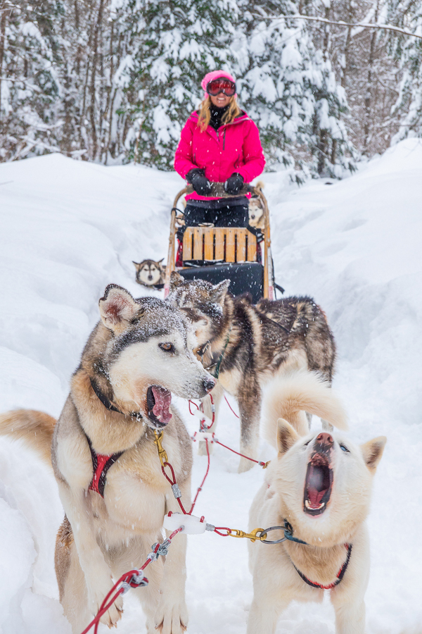 Dog Sledding Quebec City