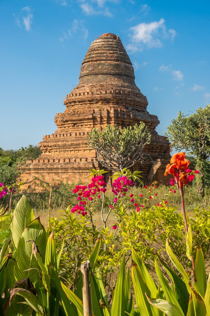 Colorful flowers in front of a temple in Bagan, Myanmar.