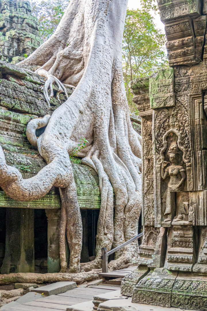 Ta Prohm Tomb Raider Location
