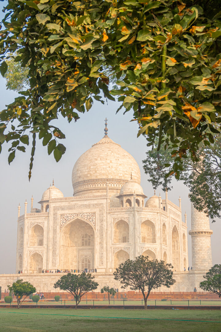 The Taj Mahal framed by a tree in the gardens.
