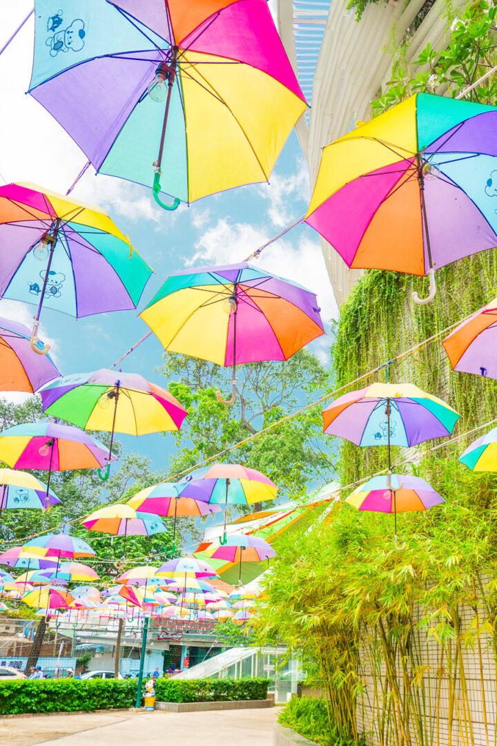 see Umbrella Street while visiting Vietnam