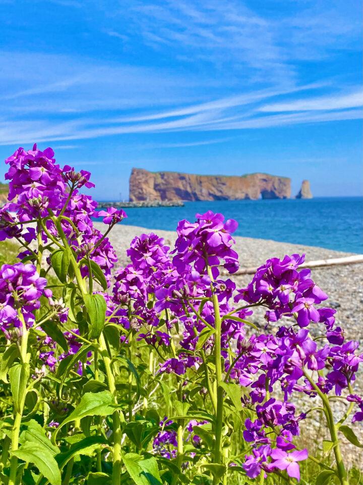 Percé rock with purple flowers